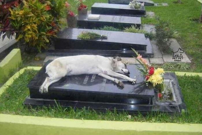 A German Shepherd Called Capitán Has Slept Next To The Grave Of His Owner Every Night At 6pm For 6 Years (2006-2012)