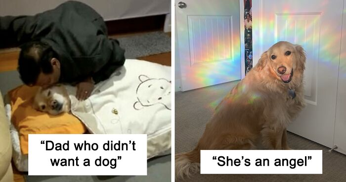 112 Uplifting Dog Posts To Make Your Day Better (New Pics)