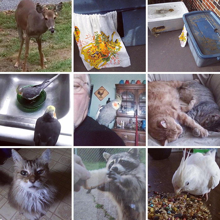 My Grandfather Takes In And Takes Care Of All His Neighborhood Animals. Strays And Rescues Included
