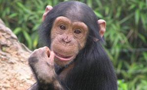 Los cuidadores de los zoos revelan de forma anónima los secretos más oscuros que guardan tras las rejas (20 fotos)