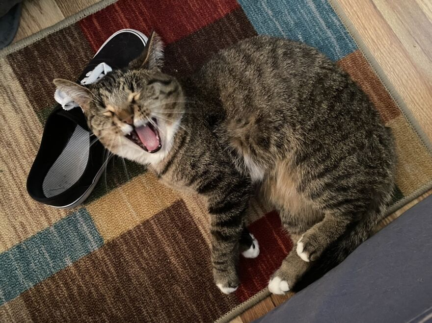 Apparently That Shoe Is Hilarious