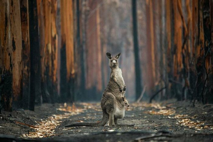 Grand Prize: 'Hope In A Burned Plantation' By Jo-Anne Mcarthur, Mallacoota, Australia