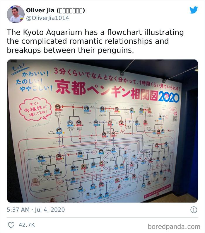 Penguin Soap Opera In Kyoto Aquarium