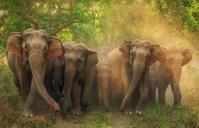 Terrestrial Wildlife, Finalist: 'Jumbo Roadblock' By Jagdeep Rajput, Corbett National Park, India