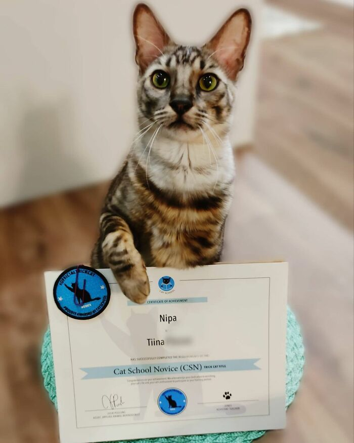 This Very Talented Cat Can Perform Over 50 Amazing Tricks