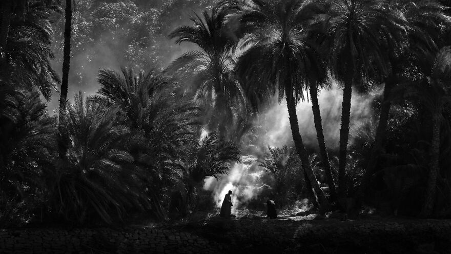 Palm Grove (1st Place In Nature And Landscape)
