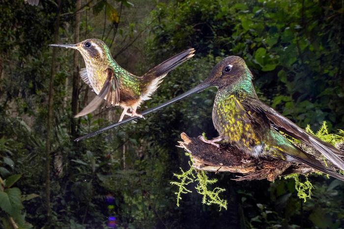 Winged Life, Finalist: 'Ropewalker' By nicolas Reusens, Papallacta, Ecuador