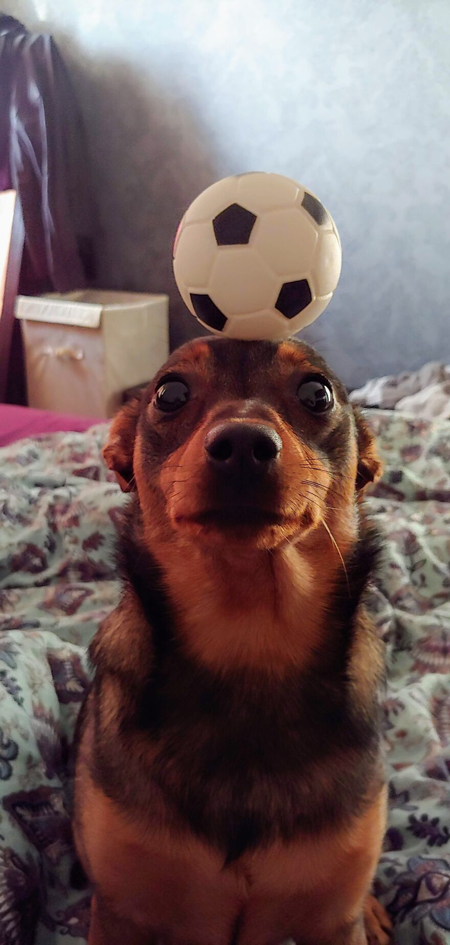 """""""Must Concentrate, Must Be One With The Ball... Sh*t, I Need To Lick My Butt"""""""