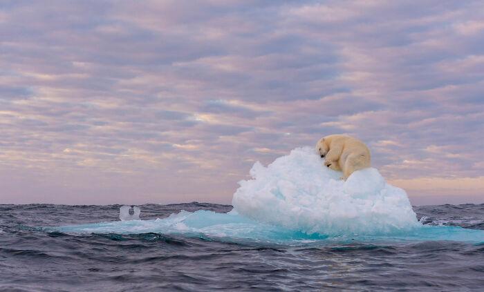Aquatic Life, Finalist: 'Treasure On Ice' By marek Jackowski, Svalbard, Norway