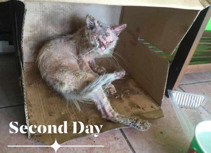 Woman Saved A Wounded Kitten From The Streets And Gave Her A Loving Home