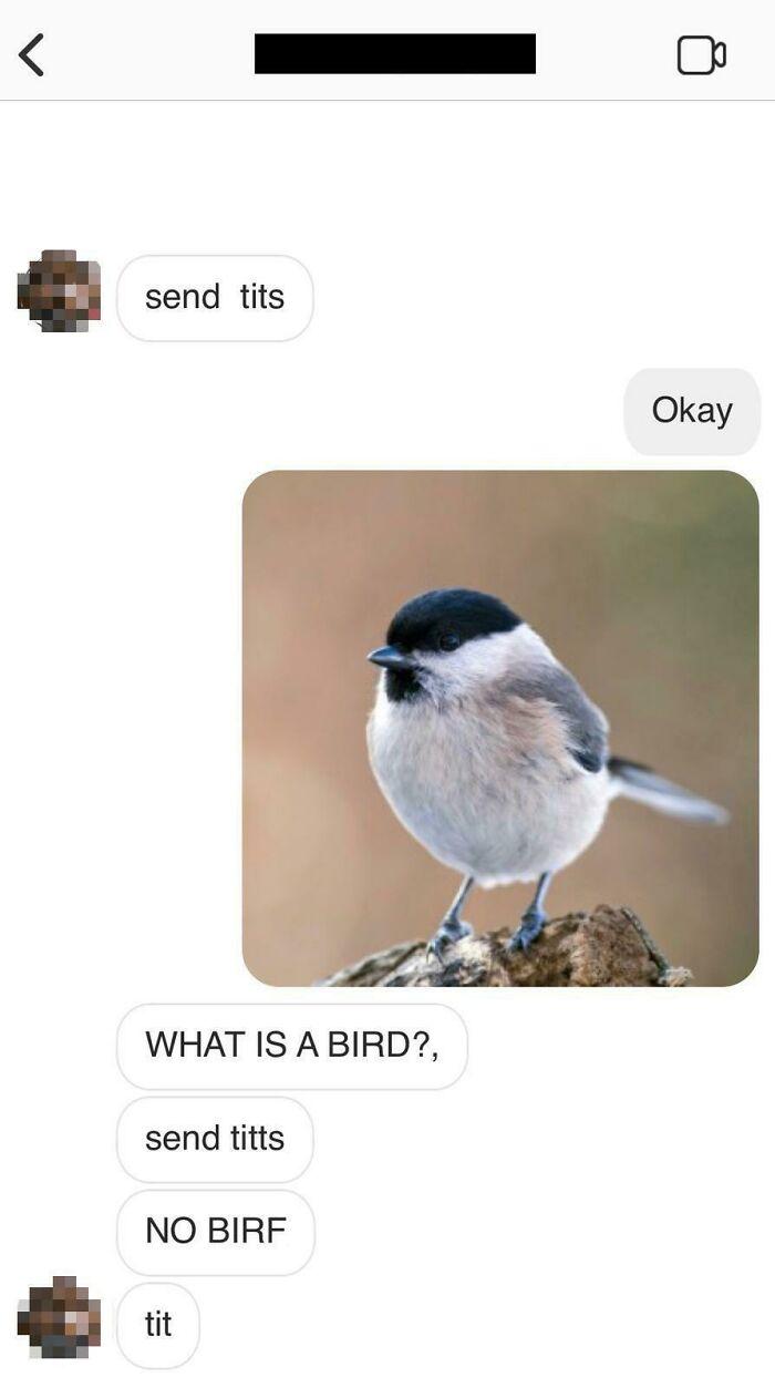 He Want No Bird