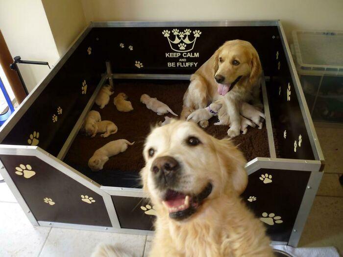 Hoy estaba a punto de tomar una foto de esta camada de cachorritos de una semana, cuando mi otro perro decidió robarles un poco de cámara