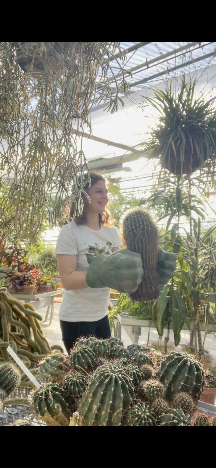 Usamos las manos de Hulk para mover los cactus en mi trabajo