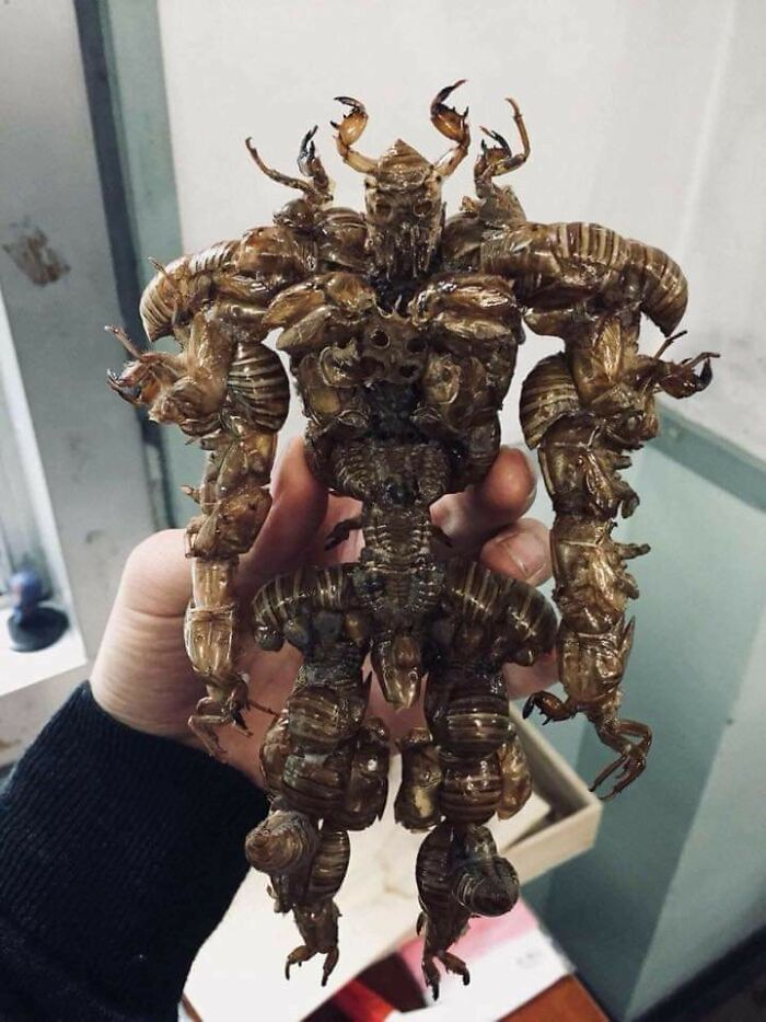 A Creature Made Entirely Of Cicada Shells