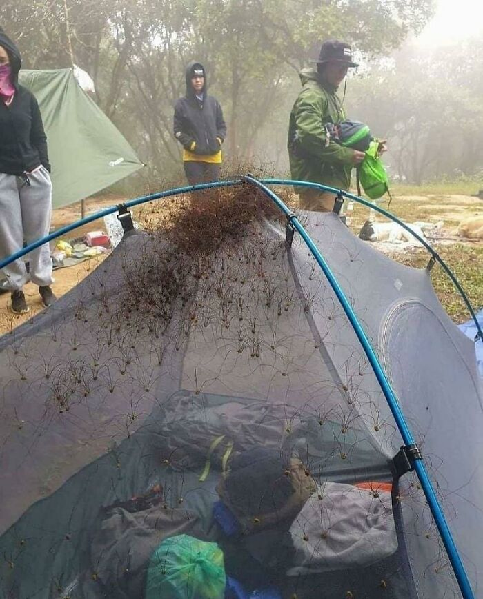Infested Spider Tent