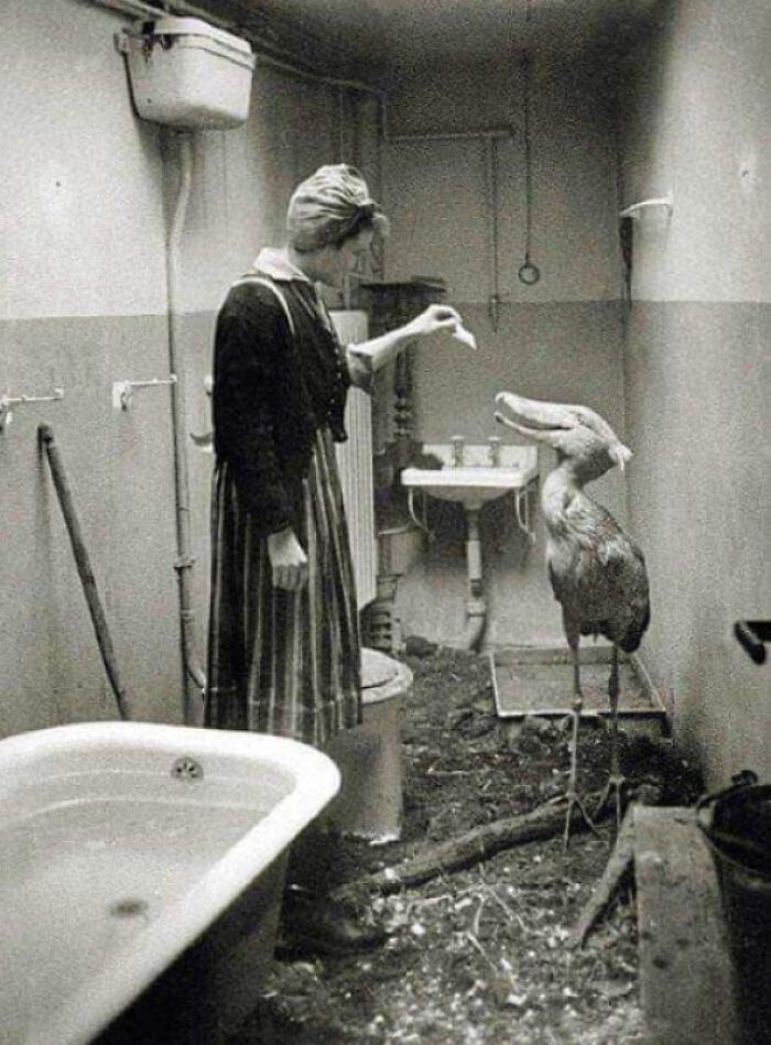 Civilians Taking Care Of Zoo Animals In Their Own Homes During Wwii