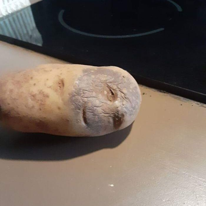 This Potato
