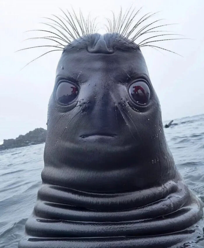 Gracias, odio esta foto de una foca