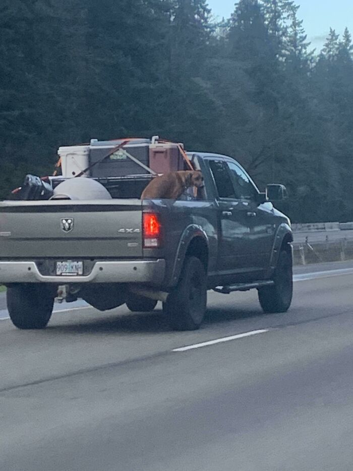 This Person Going 80 With A Dog In The Back