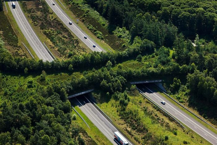 Ecoducto de la autopista A1, Veluwe, Países Bajos