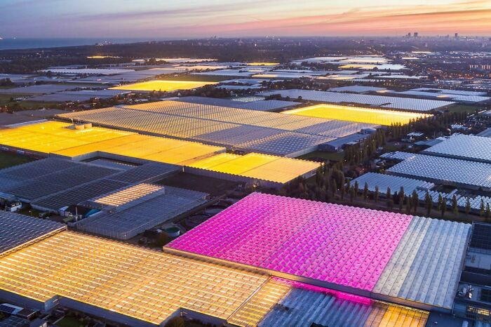 Glowing Greenhouses In The Netherlands. Photo By George Steinmetz