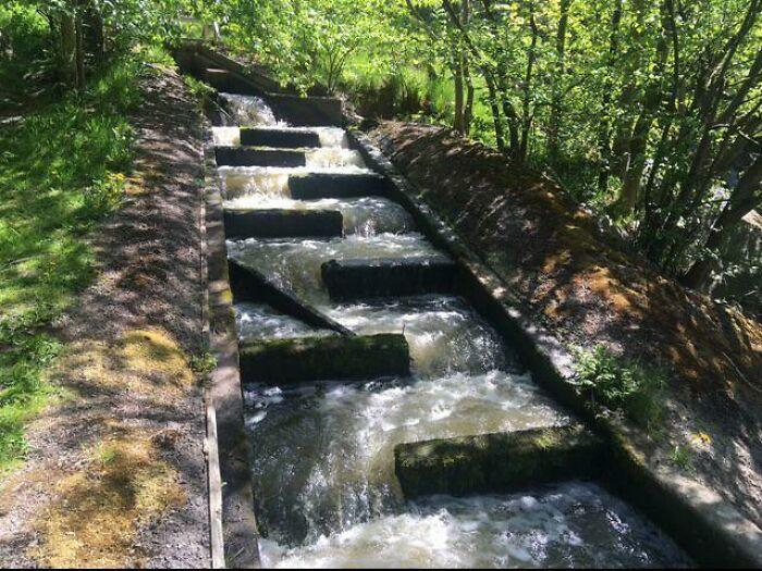 Otra escala de infraestructura, estas escaleras para salmones en Suecia