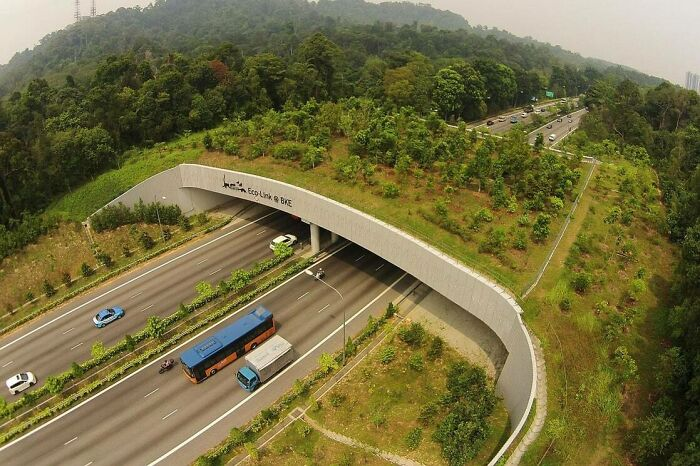 Eco-Link Over The Bukit Timah Expressway In Singapore