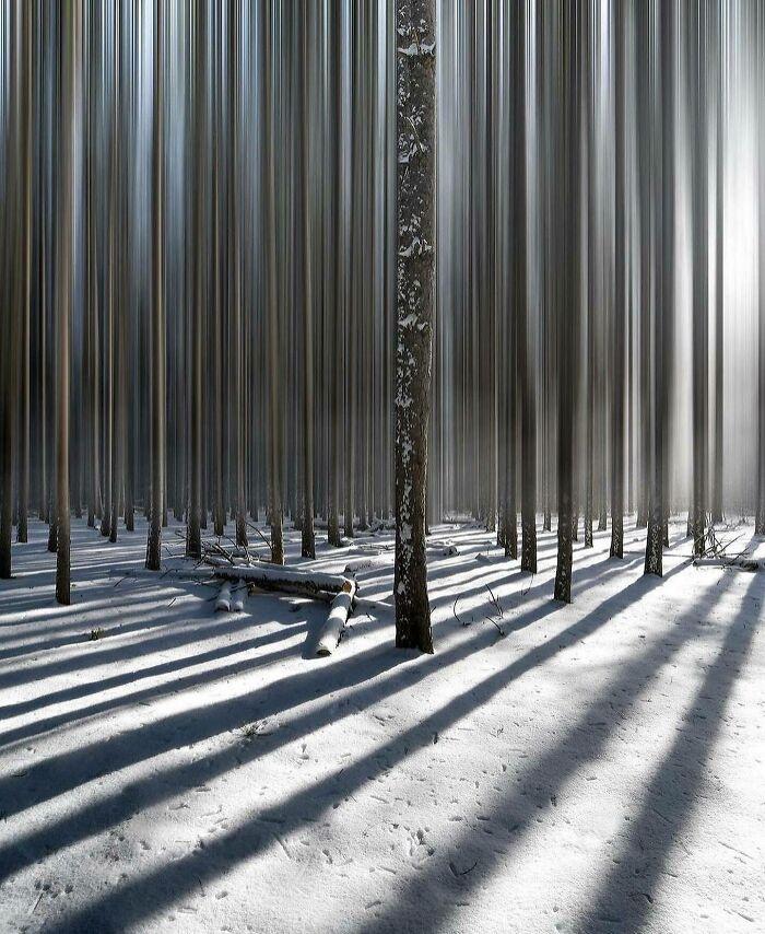 Uniformed Forest