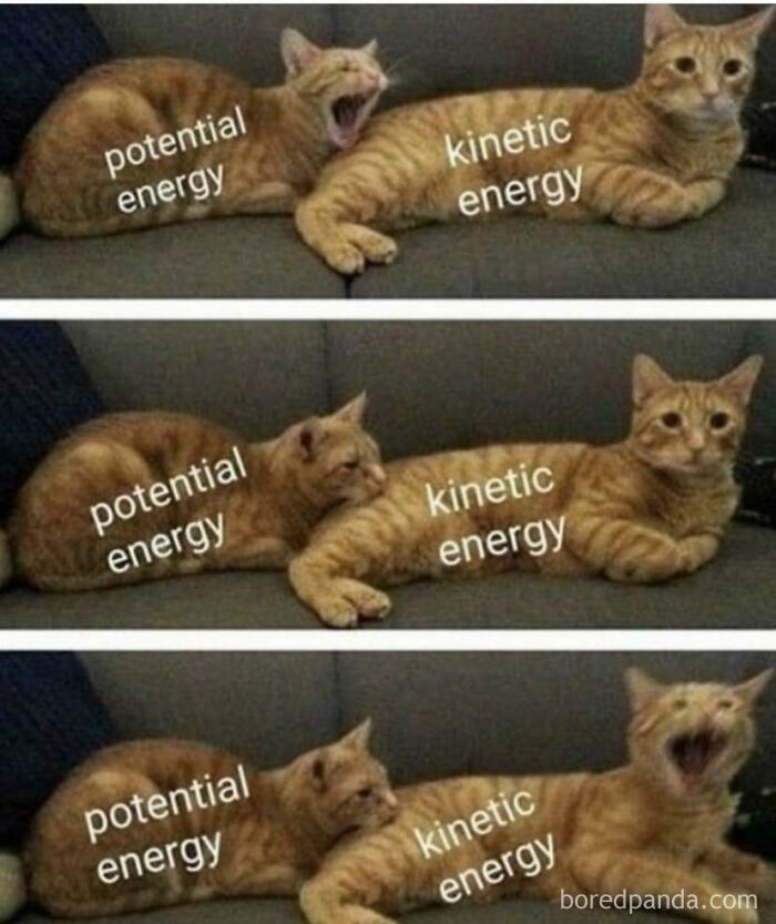 Energy Explained By Cats
