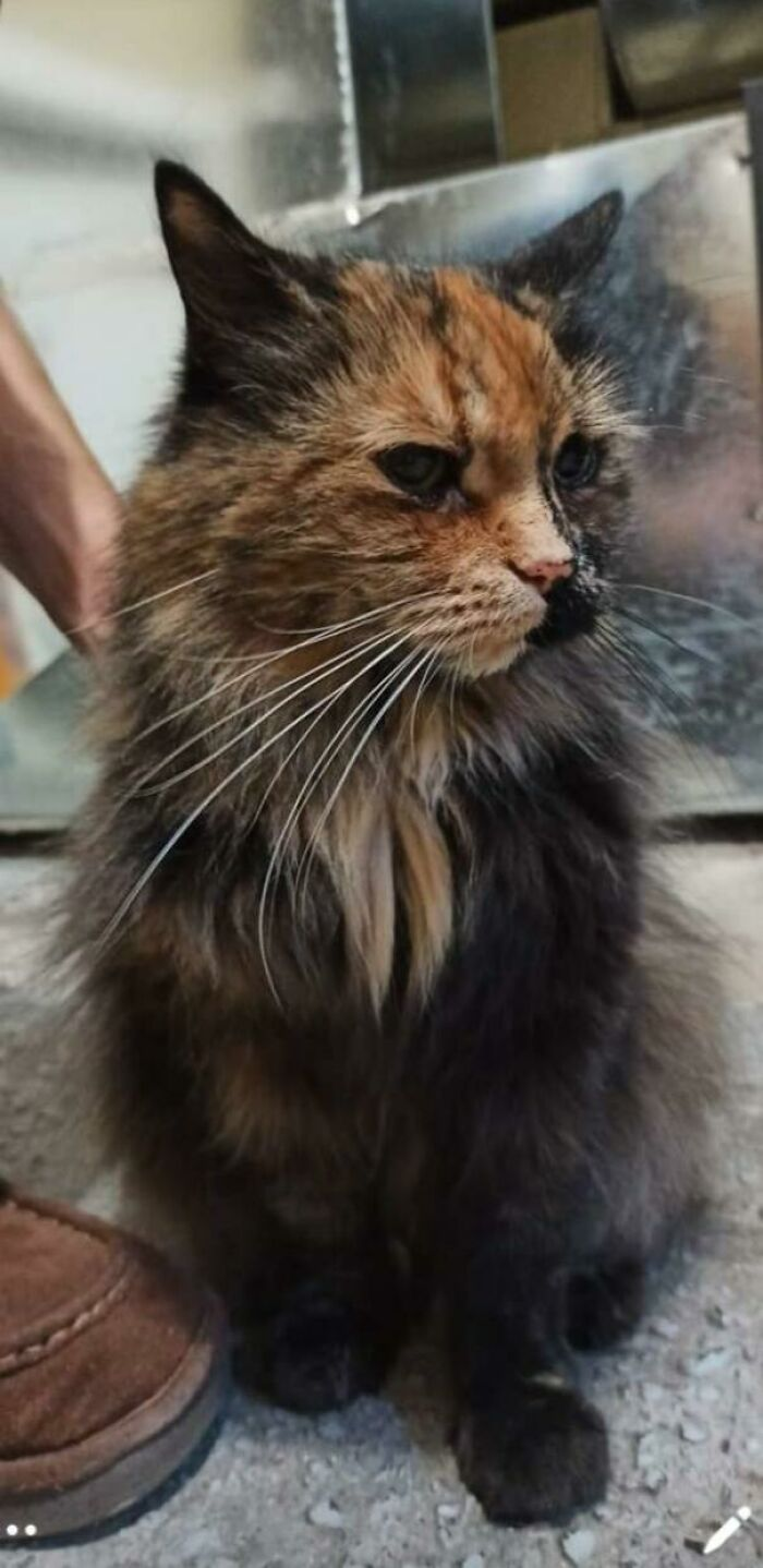 My Sister Just Adopted This Sweet 18 Year Old Tortie!