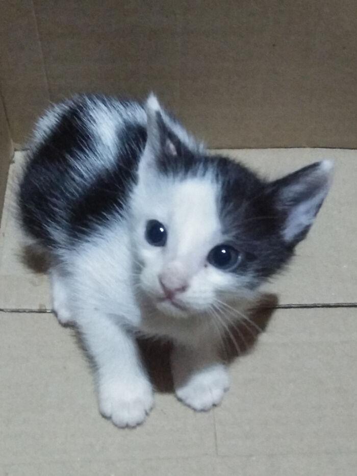 I Adopted A Kitty. She's Cute Isn't She?