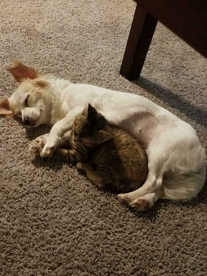 We Were Worried Our Rescue Pup Wouldn't Like Our New Rescue Kitten...