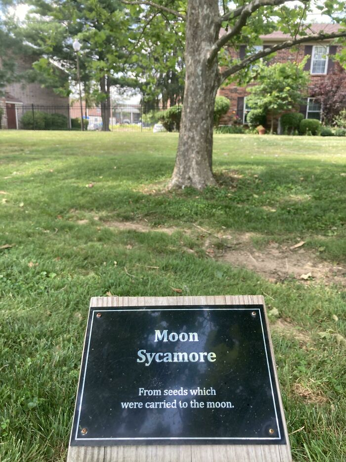 Before It Was Sprouted, This Tree Went To The Moon