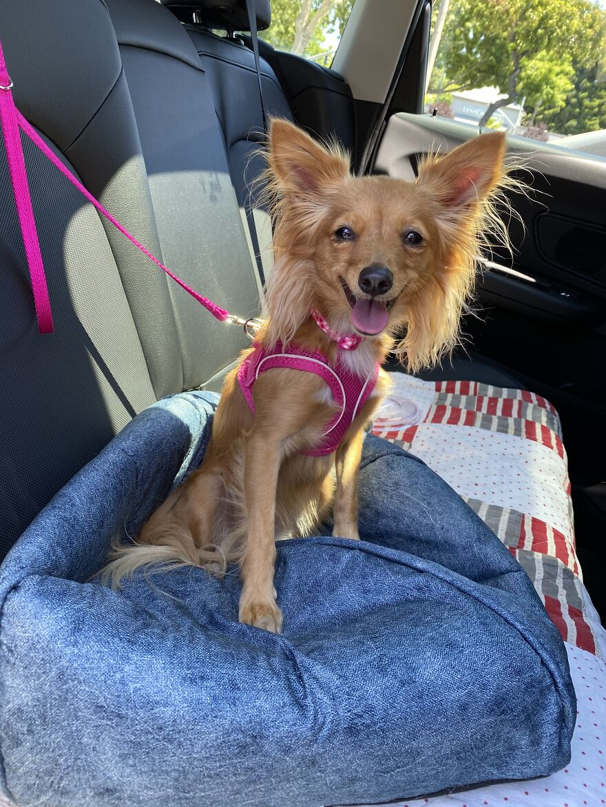 Zara On Ride Home After Being Adopted!