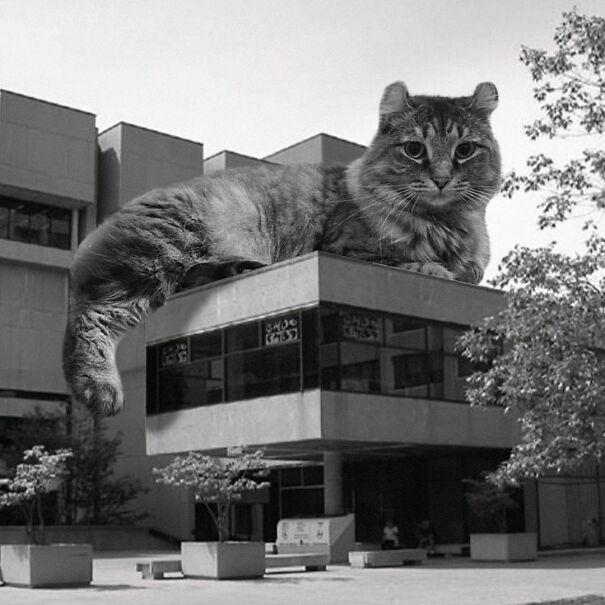 Morisset Library, University Of Ottawa; Cliff Chin, 1972, Ottawa, Canada