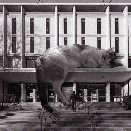 The Rock, Brown University Library; Warner, Burns, Toan & Lunde, 1964, Providence, Rhode Island