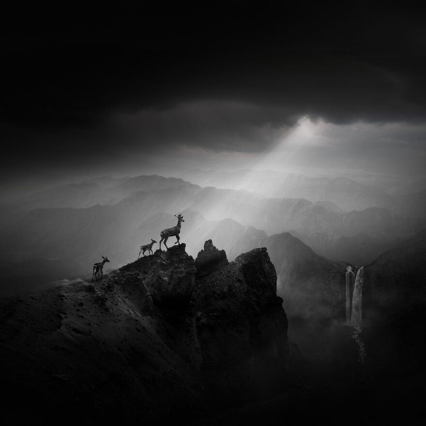 Elks On The Mountain Top (Commended In Open Theme)