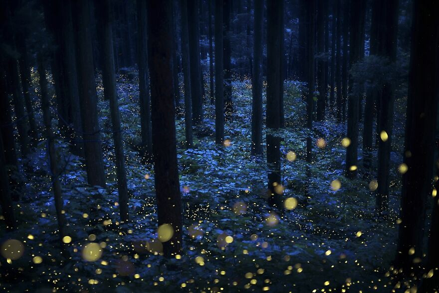 Deep Forest Fairies (Commended In Nature And Landscape)
