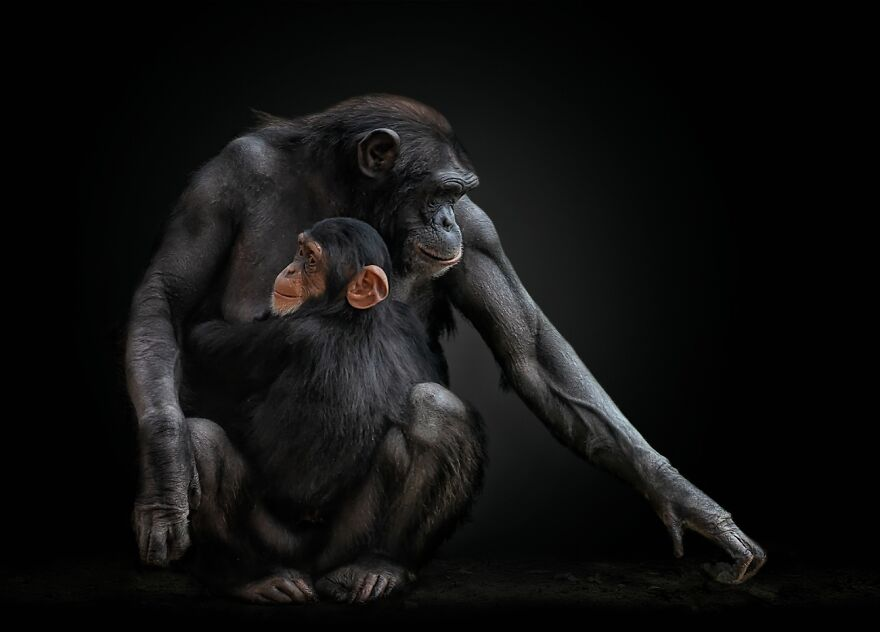 Unbreakable Bond (Highly Commended In Animals/Pets)