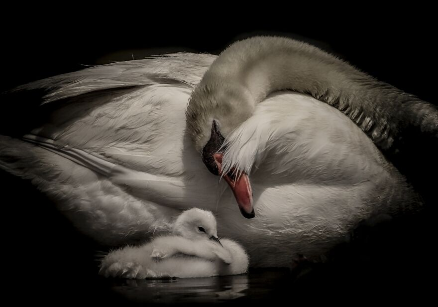 A Mother's Love (Highly Commended In Animals/Pets)