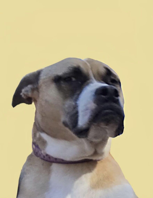 My Dog Should Be A Meme.