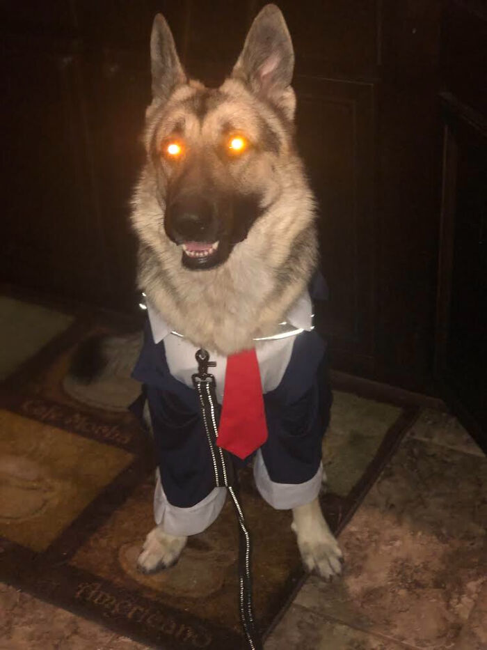 """""""Yeah. I Know It's Halloween. But For Dressing Me Like A Hooman, Your Death Shall Be Slow & Painful...."""""""
