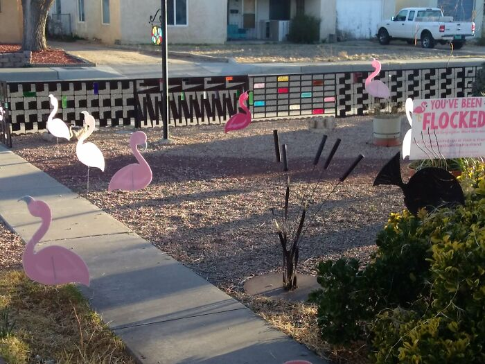 """Our Front Yard After We Were """"Flocked"""""""