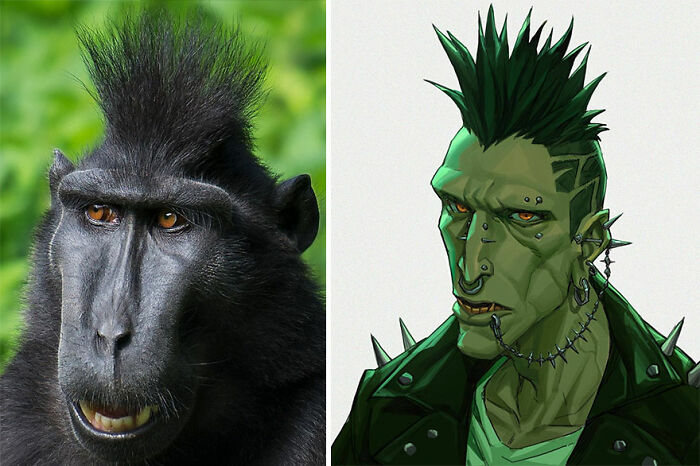 Macaco negro crestado