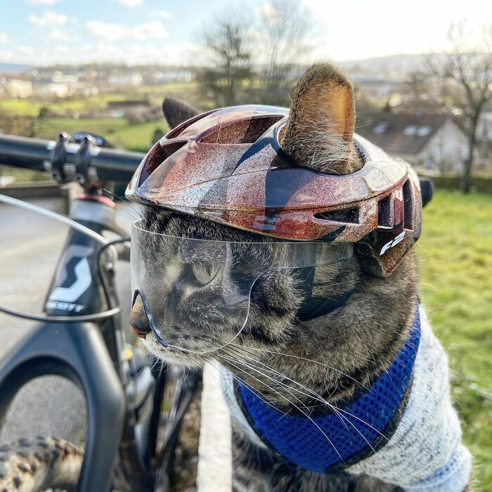 Meet Cathode, The Cat That Has Incredible Adventures With Its Owner