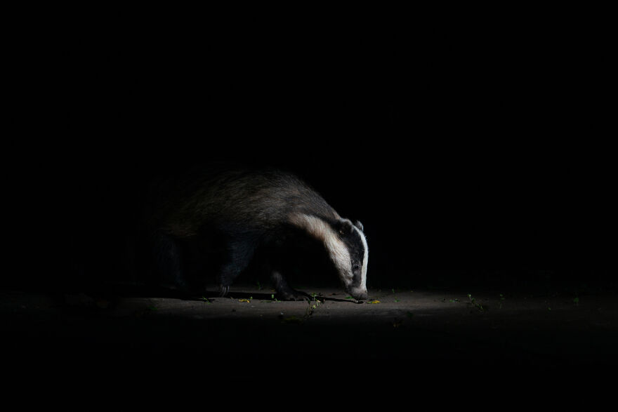"""Into The Spotlight"" By Dani Clarke"