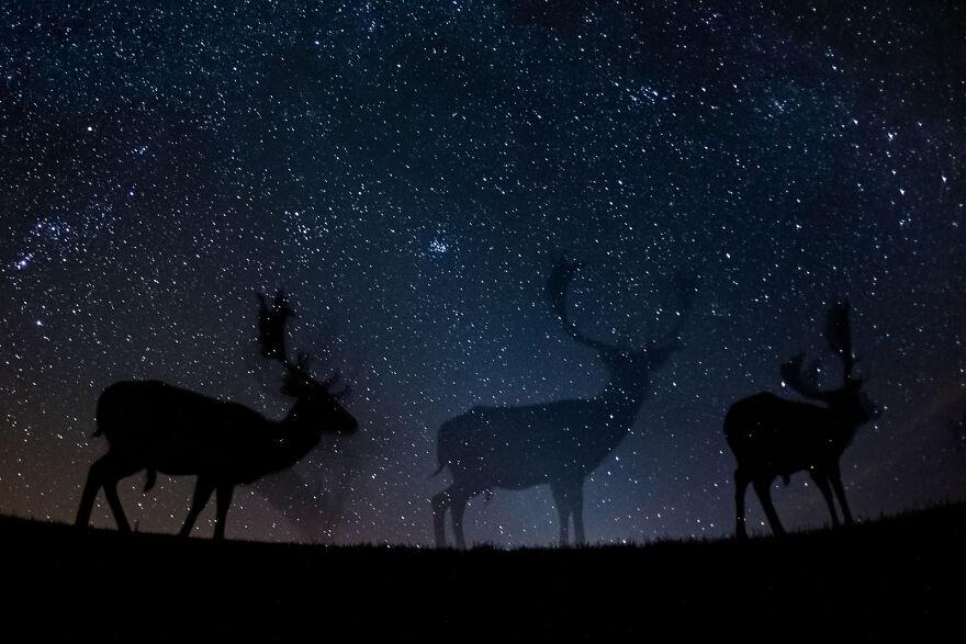 """""""Starry Night"""" By Bence Máté"""