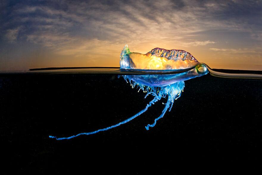 """""""Bluebottle Sunrise"""" By Grant Thomas"""
