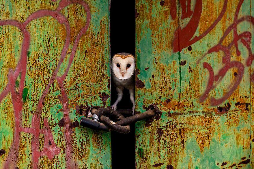"""""""The Door"""" By Jose Luis Ruiz Jimenez"""