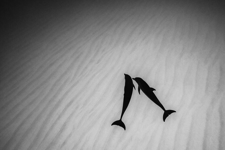 """""""Dolphin Silhouettes"""" By Richard Condlyffe"""